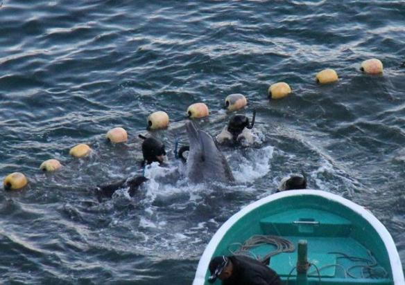 December 14, 2012 the capture and suffering continue.By SSCS Cove Guardians