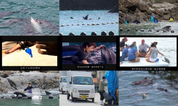 Dolphins slaughtered while IMATA celebrates in Hong KongTaiji dolphins by SSCS Cove Guardians 2012