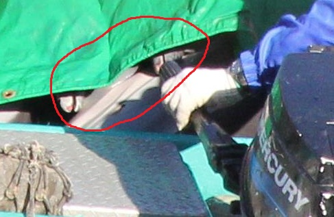 Dolphin bodies hidden under tarps. December 20, 2012. By SSCS Cove Guardians