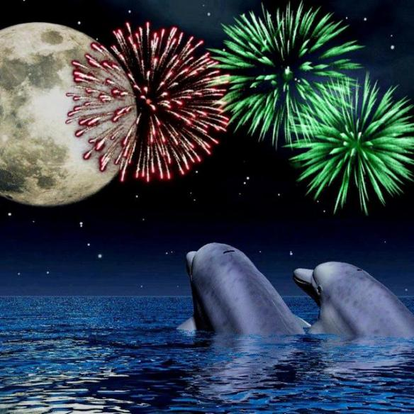 Dolphin Watching Fireworks by Born Free Facebook