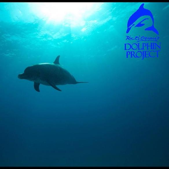 Wild and Free! Ric O'Barry  The Dolphin Project