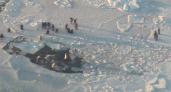 Ariel view of the orca trapped under ice.