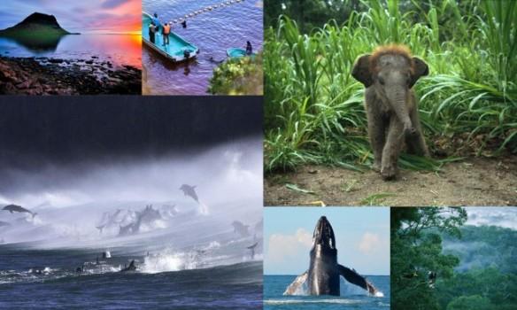 #dolphinsloveus #ecoleaders #tweet4dolphins