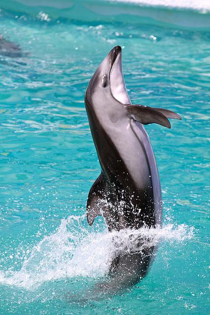 Kamogawa SeaWorld 2009 White Sided Dolphin by K.K.