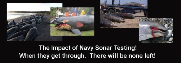 By Save Whales & Dolphins from Navy Sonar Massacre!
