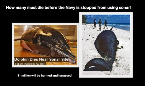 Dolphin death linked to Naval Sonar exercises off the coast of San Diego,Ca. 2008/In 2000, 17 wnales stranded on beaches in the Bahamas following U.S. Navy sonar exercises. Beaked whales appear to be especially sensitive to sonar.