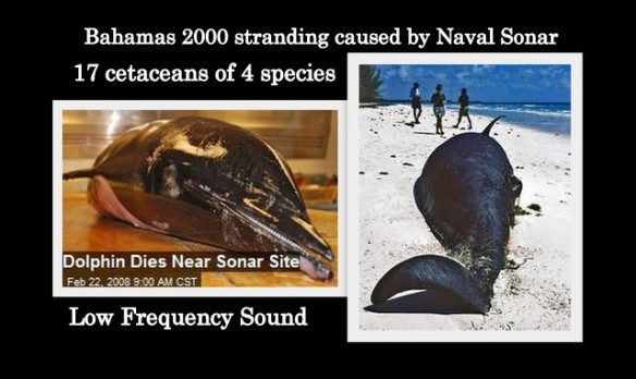 2000 Bahamas stranding caused by Naval Sonar