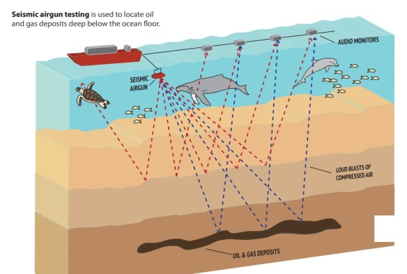 How a seismic test works
