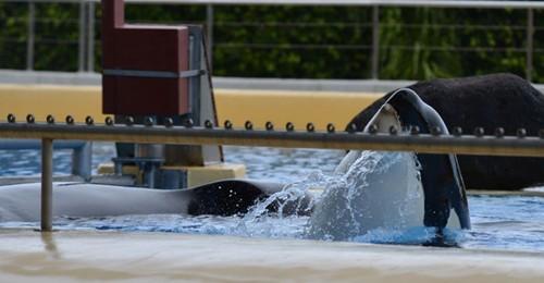 Ban Dolphinarium Donation link.