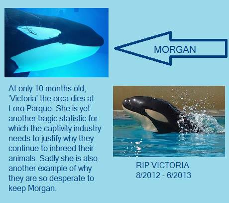 Morgan and Vickie both were housed at  Loro Parque