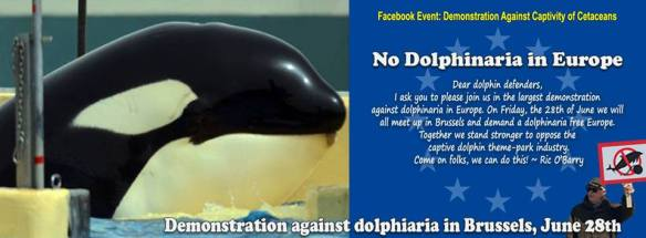 Be a voice for Morgan and Join the Event to No Dolphinaria in Europe on June 28, 2013