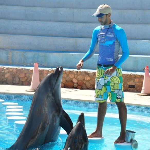 Kareem Maghraby executive director and dolphin trainer Dolphin Discovery & Research training the Taiji blood dolphins