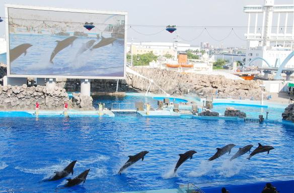 Port of Nagoya Aquarium working with WAZA displaying drive fishery dolphins.