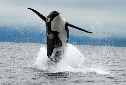 Join the Tweetstorm and Support Orca Freedom!
