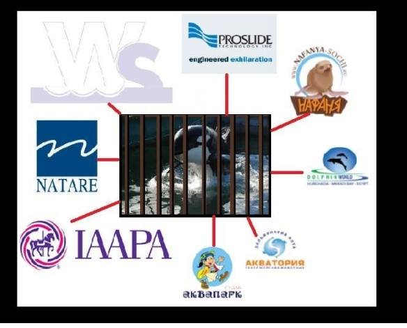 White Sphere's Partners Support Orca Capture!