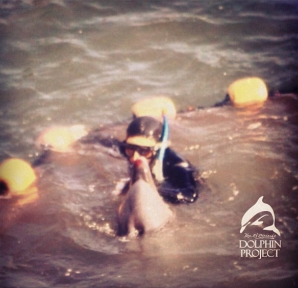 Dolphins bloodied and exhausted as hunters separate families. By Sakura Paia Ric O'Barry Dolphin Project January 18, 2014