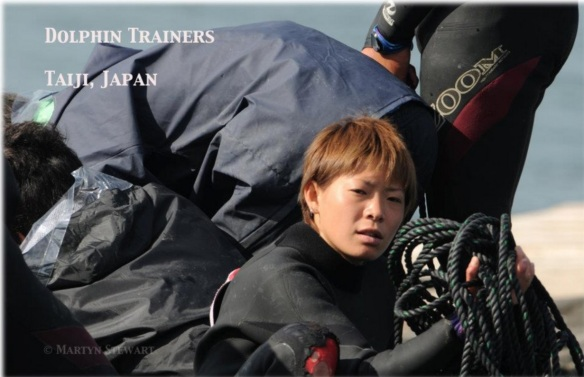 The dolphin trainers work side by side with the hunters simultaneously selecting and slaughtering dolphins. November, 2011 by Martyn Stewart