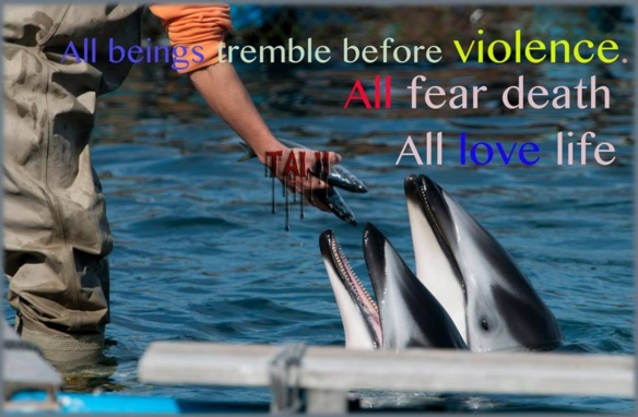 All beings tremble before violence. All fear death, all love life.......... They/We are no different! — at 太地町
