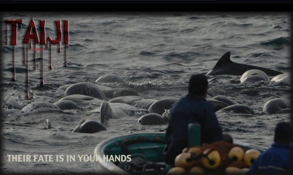 """Their fate is in your hands"". Taiji, November 2013 by Martyn Stewart"