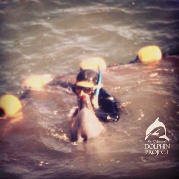 A dolphin is seen bleeding as he tries to escape from the nets. This is the sad truth behind the captivity industry. by The Ric O'Barry Dolphin Project