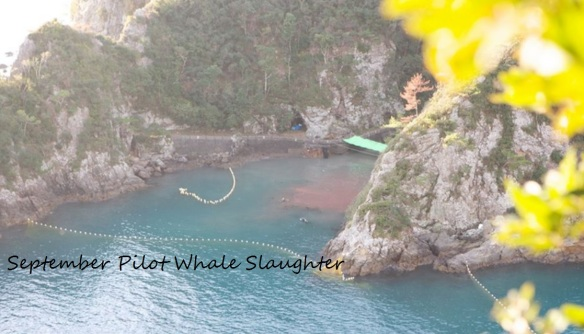 September pilot whale slaughter in The Cove by the Ric O'Barry Dolphin Project
