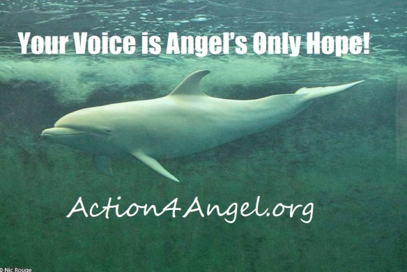 Your voice is Angel's hope!