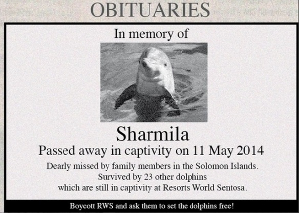 Please share this post in memory of Sharmila, Wen Wen and the other dolphins who have died, and to give a voice to the remaining wild-caught dolphins at Resorts World at Sentosa. Thank you to Kuan Eng for speaking up for Sharmila through the creation of this striking image.