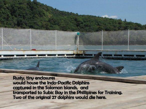 The original 27 dolphins were transported to tiny, rusty enclosure in Subic Bay in the Philippines. Two of the dolphins would die here.
