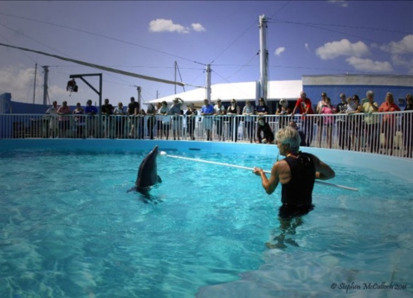 Robin Friday teaches stranded dolphin Hope at Clearwater Marine Aquarium to do circus tricks.