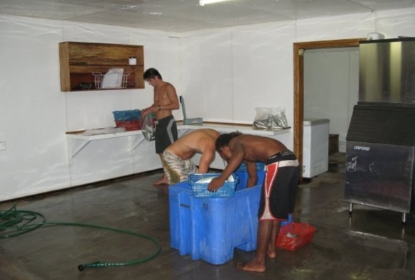 Robin Jr. and Chad Friday prepare dead fish for the captive indo pacific dolphins with an islander.