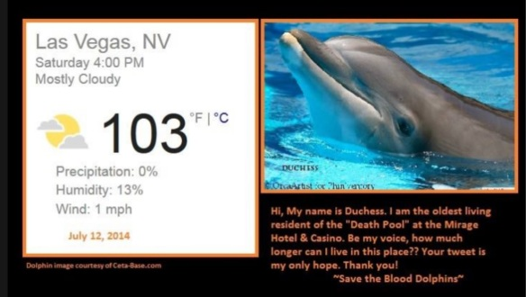 TWEETSTORM: Free the Mojave Dolphins from the Mirage Hotel! Join here!