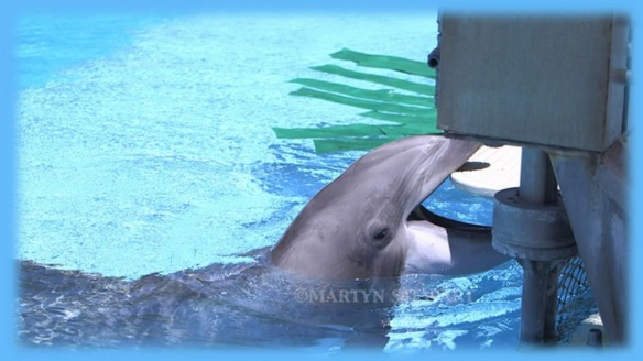 Join the Tweestorm and be a voice for the dolphins suffering in the Mirage's Dolphin Garden Habitat in Las Vegas!
