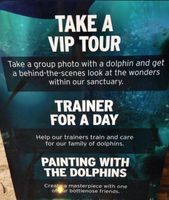 Take a VIP tour, trainer for a day image taken by Cindy
