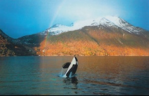 5 years of freedom before his death in his home the ocean. Keiko loved those last years of life PBS don't take that away!  www.earthisland.org