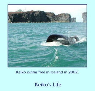 Keiko swims free on 2002 by the Orca Network