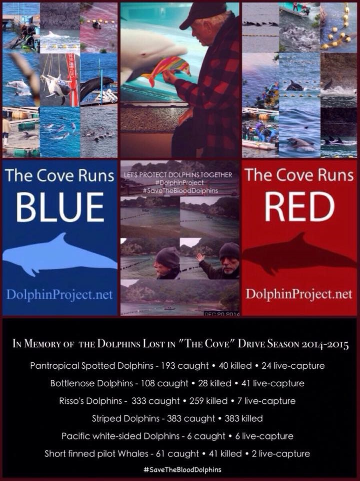 Dolphin project in memory