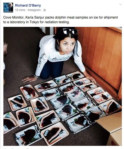 Cove Monitor, Karla Sanjur packs dolphin meat samples on ice for shipment to Tokyo to a lab for Radiation Testing