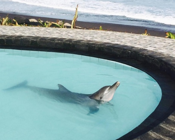 By nataschaelisa: This is one of the four wild dolphins who have been held for over a year in this tiny pool at WAKE resort in Bali, they can literally see the ocean. This was absolutely heart breaking to see today. Please help by signing the change.org petition linked in my profile #dolphins #keramasbeach #bali #behuman #freebalidolphins